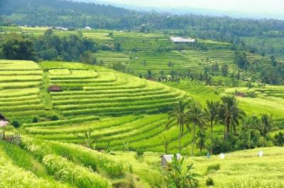 Le choc culturel en Indonésie